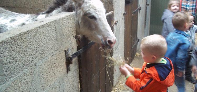 ferme du coq aux ânes
